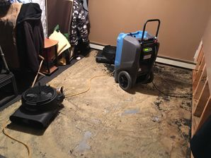 Mold Removal in Stamford, CT (1)