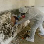 Mold Remediation in Stamford, CT (1)